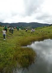 Reflorestamento_Destaque