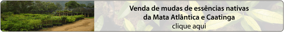 venda-de-mudas-de-essencias-nativas-da-mata-atlantica-e-caatinga