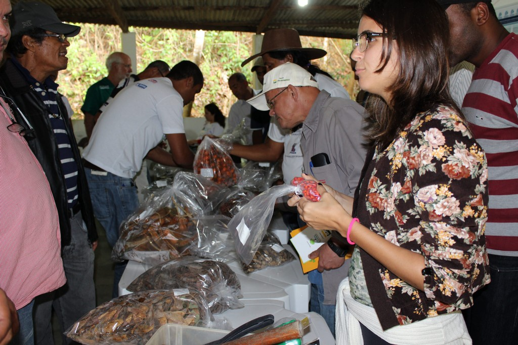 Participantes manuseiam sementes florestais nativas no curso que deu origem ao encontro para organizar a Rede